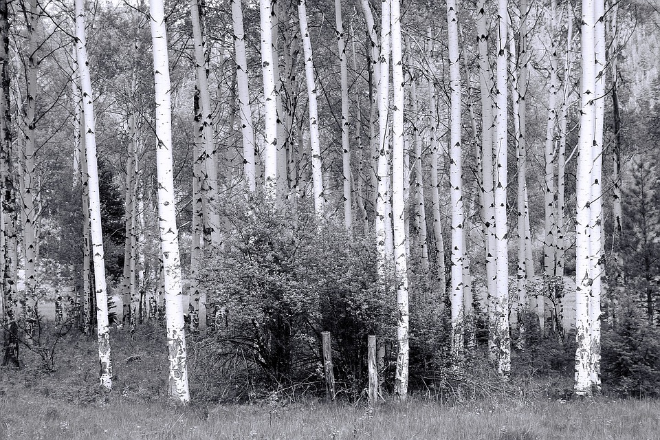 trees in the woods