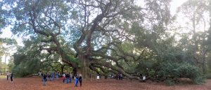 a group of people in front of the angel oak tree