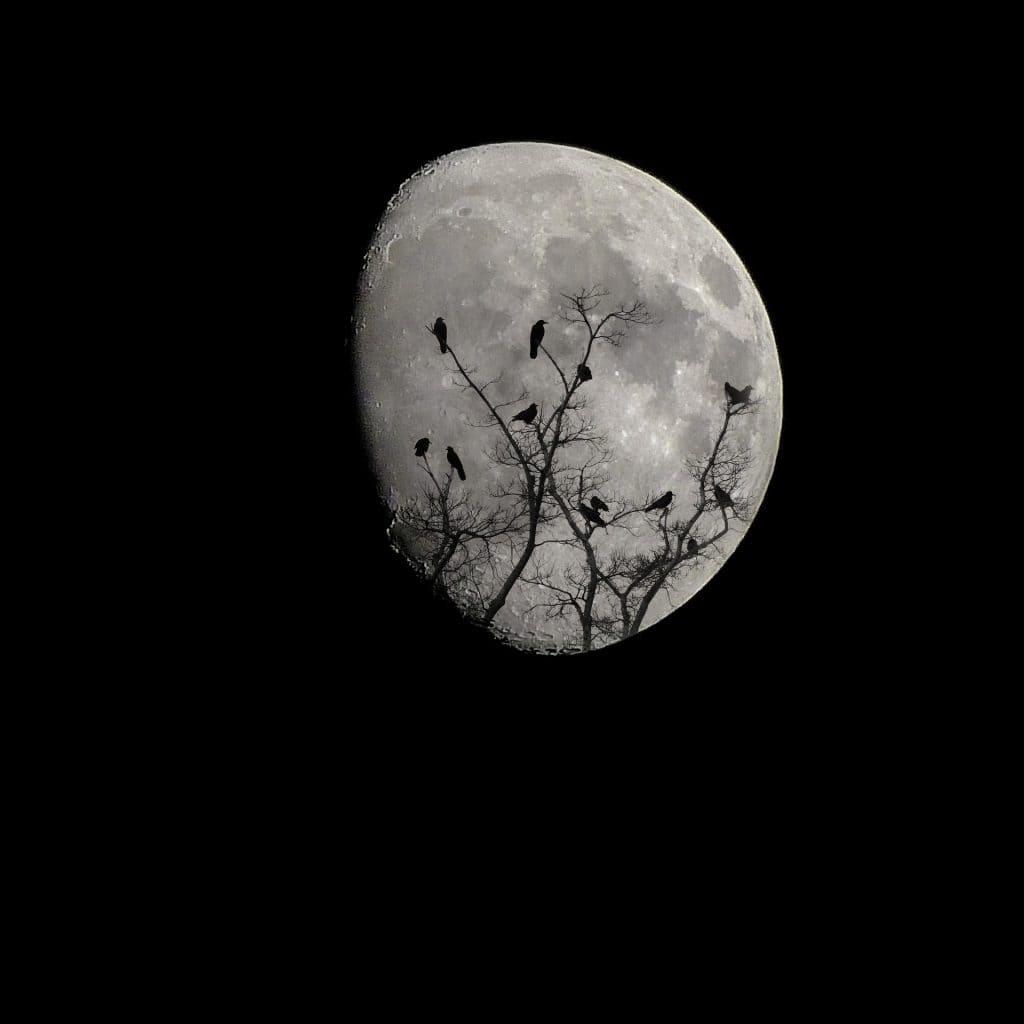 Haunted Charleston: Most Haunted Places #7: Angel Oak Tree - Photo