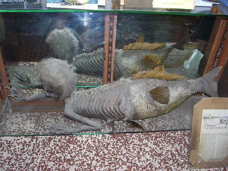 A disccated body of a monkey show to a fish and on display as a mermaid